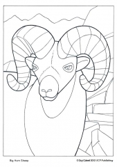 big-horn-sheep_0