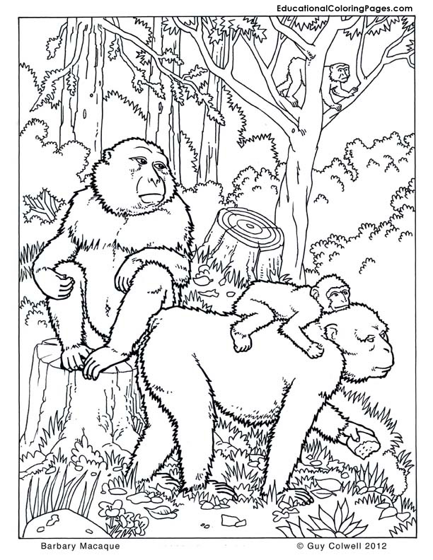 Trees Coloring Pages Educational