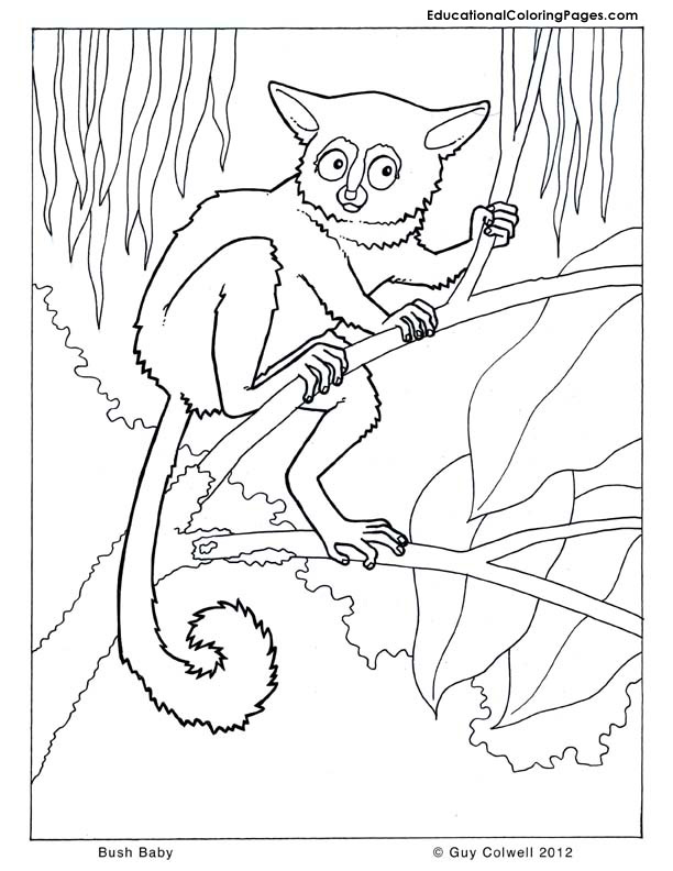 Trees coloring pages educational fun kids coloring pages for Bush coloring page