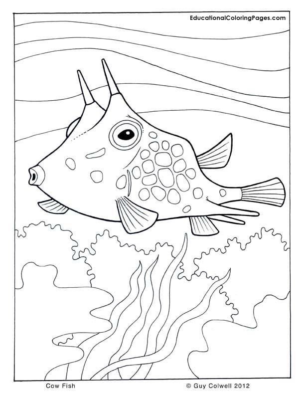 Cow-Fish