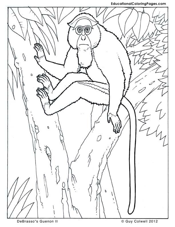 DeBrassos Guenon coloring