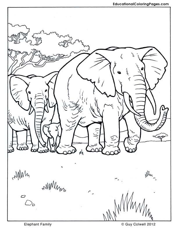 mammals coloring pages - photo#31
