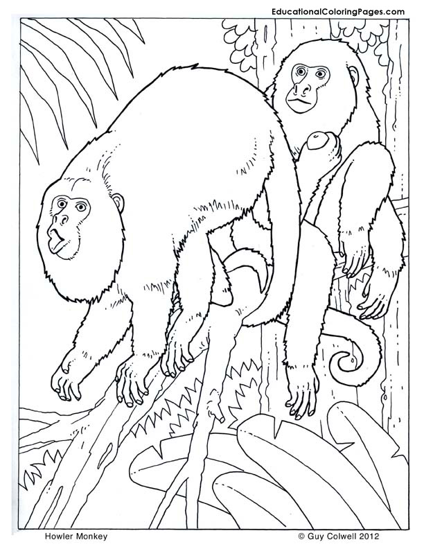 Primates Coloring Pages Educational Fun Kids Coloring