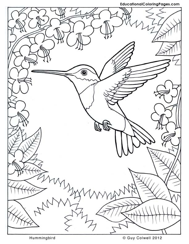 Trees coloring pages educational fun kids coloring pages for Coloring pages of hummingbirds