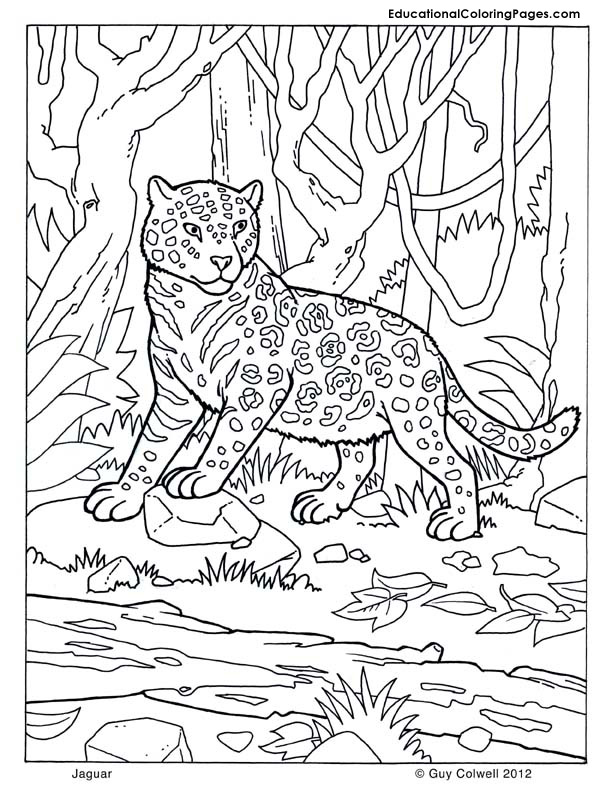 Jaguar coloring