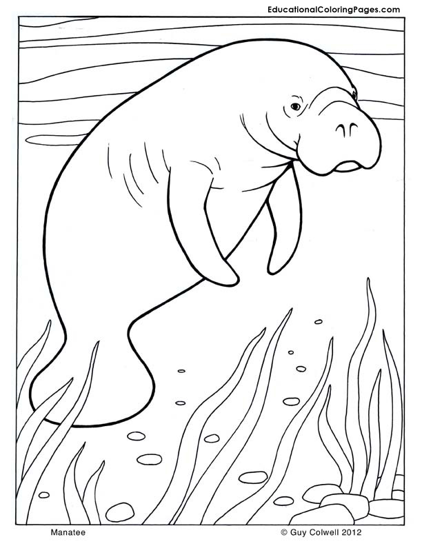 mammals coloring pages - photo#28