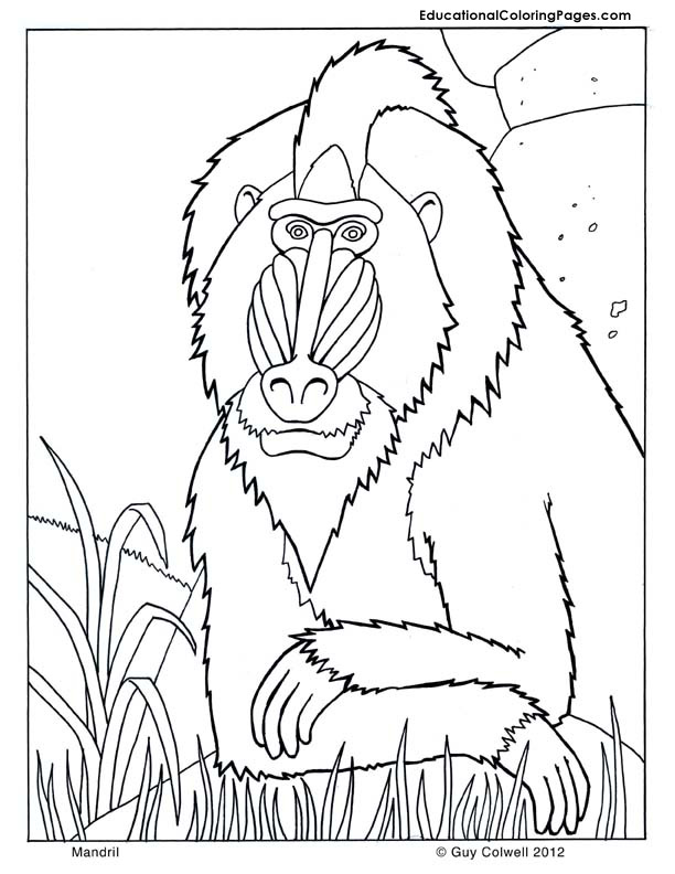 Mandril coloring