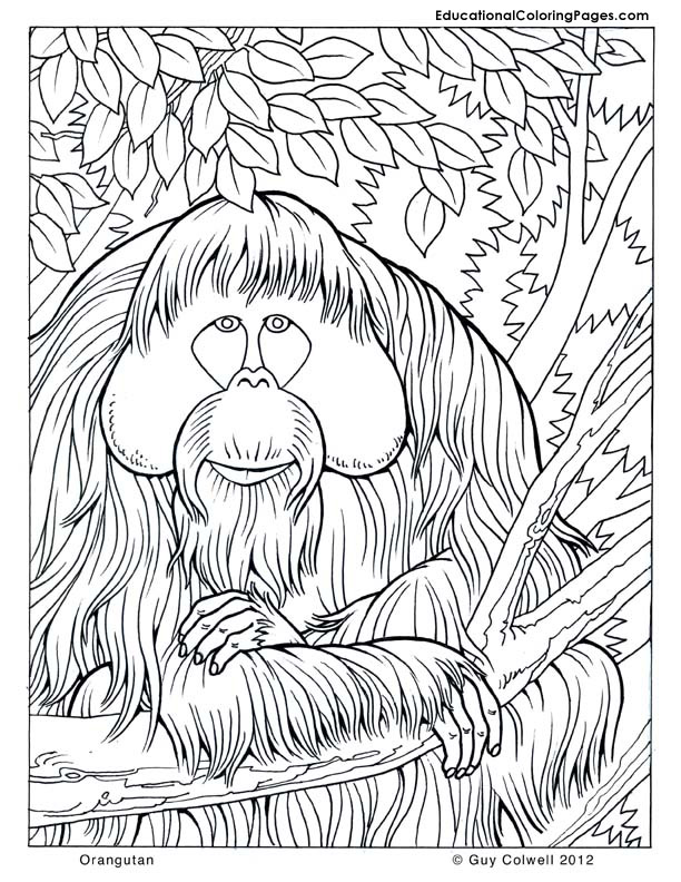 trees coloring pages educational fun kids coloring pages and preschool skills worksheets. Black Bedroom Furniture Sets. Home Design Ideas