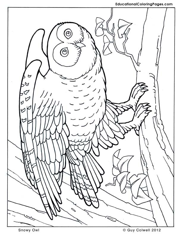 Trees Coloring Pages  Educational Fun Kids Coloring Pages