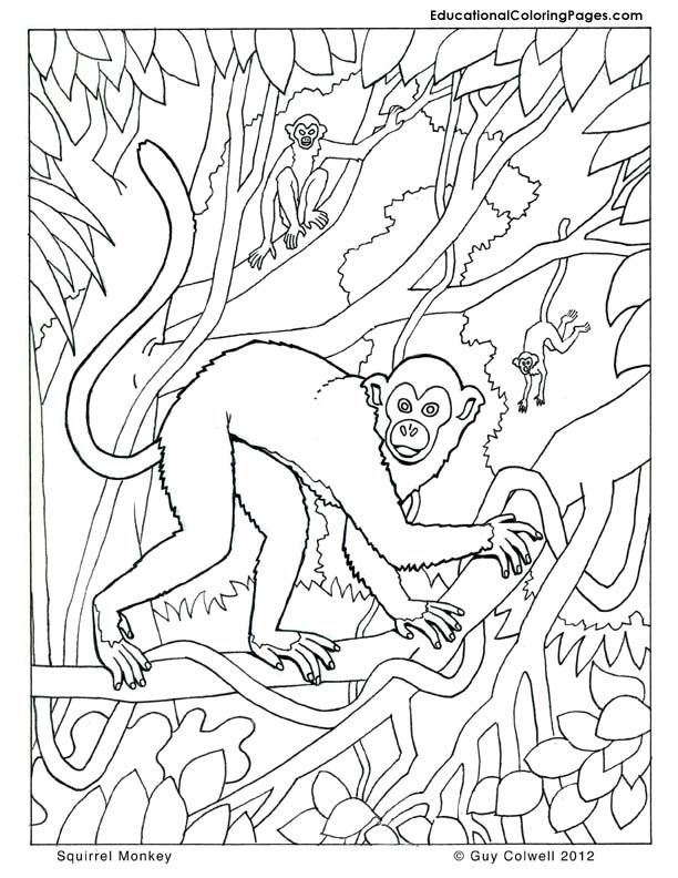 monkey coloring