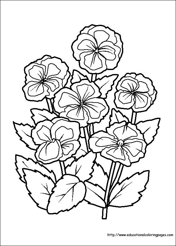Flower Coloring Coloring Pages