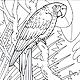 Birds Colouring Books