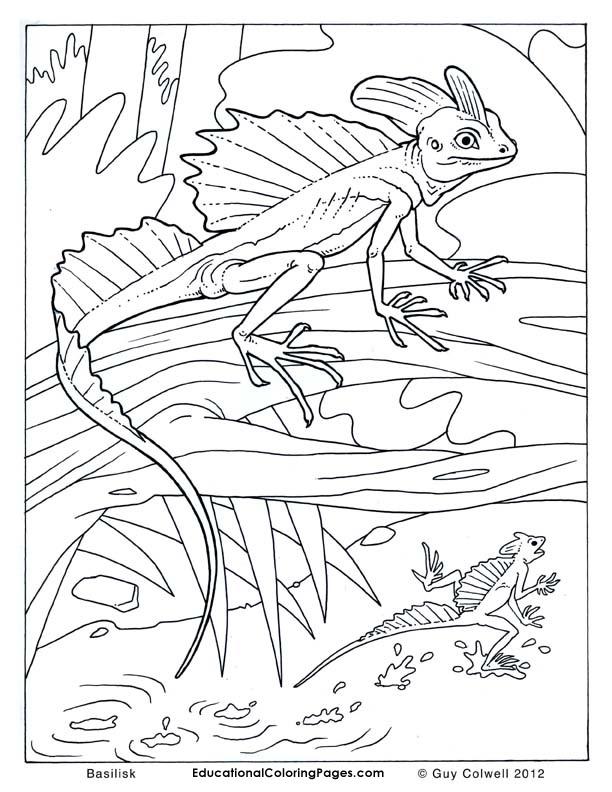 Basilisk Educational Fun Kids Coloring Pages And Preschool