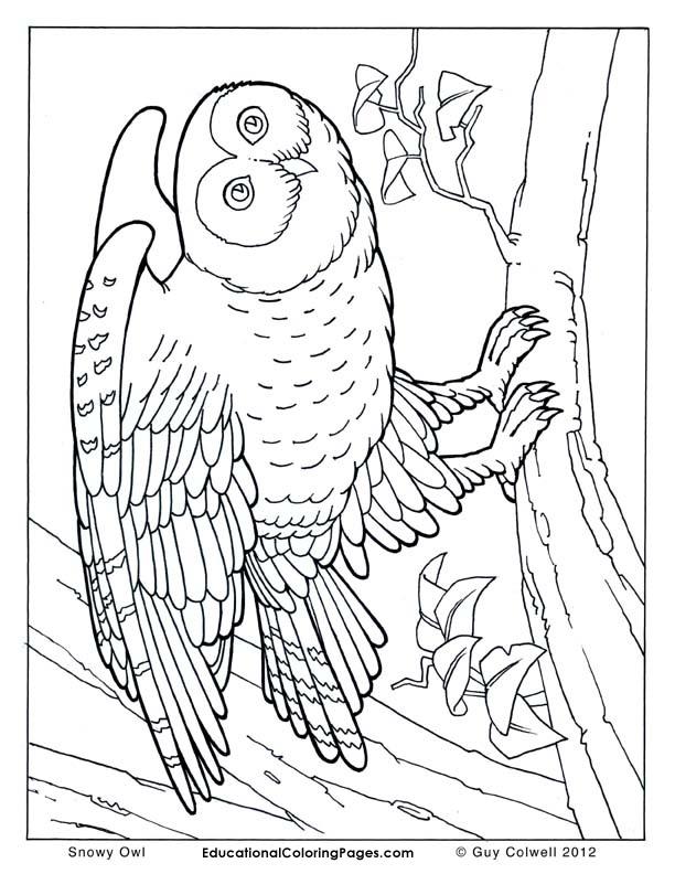 Birds Book Two