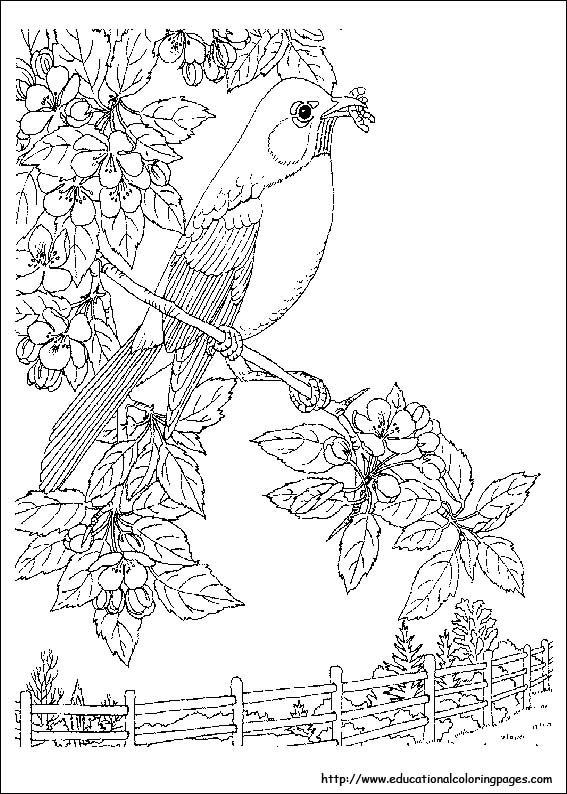 Nature coloring pages educational fun kids coloring pages and preschool skills worksheets